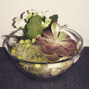 Succulent plants in glass bow-PAOLA